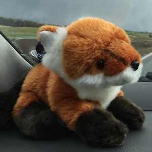 'Alan' the Fox as named by Sean Lakeman!